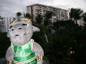 Rocky enjoying the view from the hotel in San Juan, Puerto Rico, Viva! Rocky liked the flag showing in this photo.