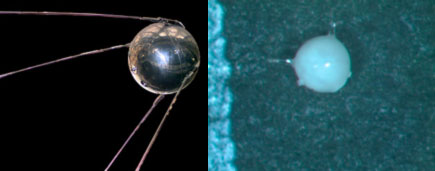 An image comparing the shape of the Sputnik satellite to that of a Oolina sp. benthic foraminifer.